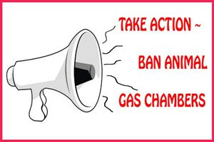 Ban Animal Gas Chambers