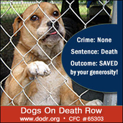 Dogs on Death Row