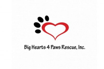 Big Hearts 4 Paws Rescue Inc