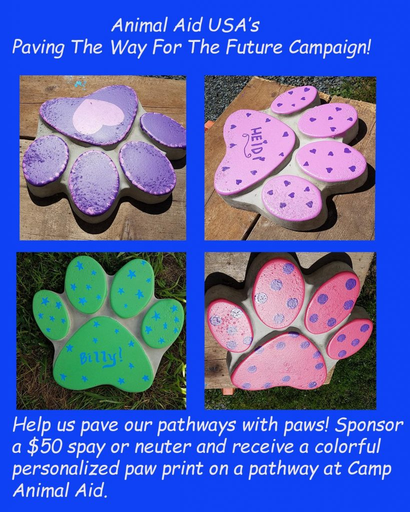 Paving The Way Paw Prints